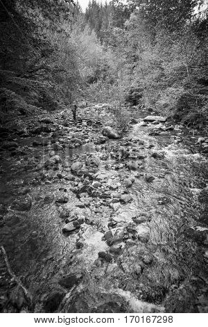Black and white view with torrent river running through the mountain with trees and rocks
