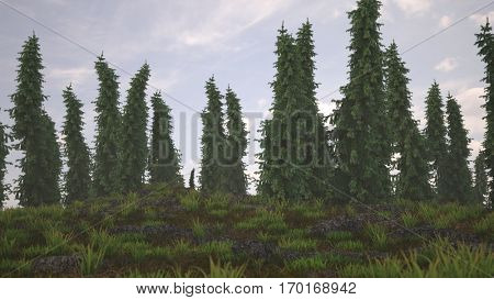3d illustration of the pine-tree  woods
