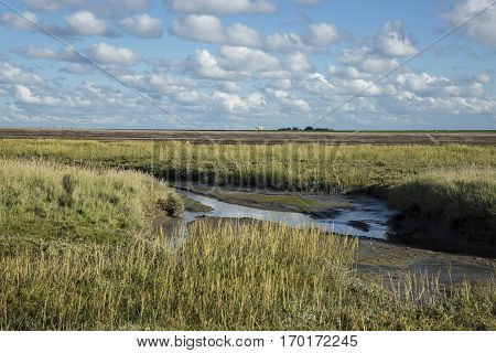 Dutch maritime landscape with heathland blue sky and cloud Waddenzee Friesland The Netherlands