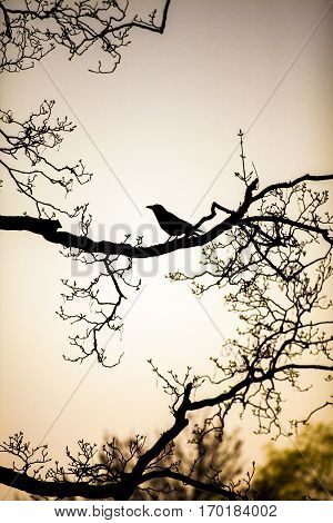 black silhouette of a raven perched on the bare branches of a tree