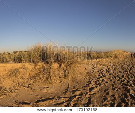 sand dunes with golden sand and marram beach grass with blue sky background, Casse de la Belle Henriette, located between l'Aiguillon sur Mer and la Tranche sur Mer, Vendee, France