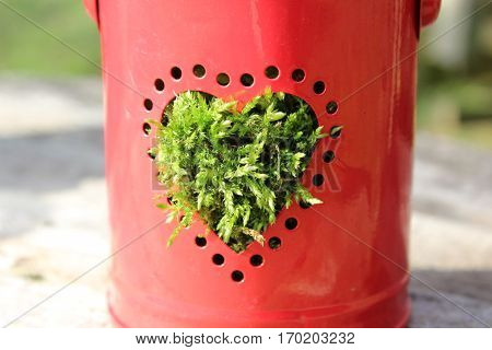Small red metal bucket with round perforations in the form of a heart and moss-filled glass, stands on weathered brown-gray table, in the background wooden legs of an old chair, green meadow, In the sun in February 2017 in Häselingen