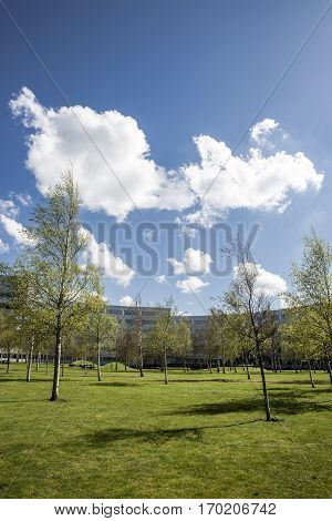 Park with green grass and small trees in front of office buildings in a sunny sping day