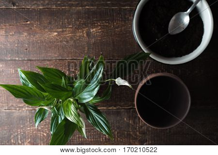 Flower Spathiphyllum a bowl with the ground on the table horizontal