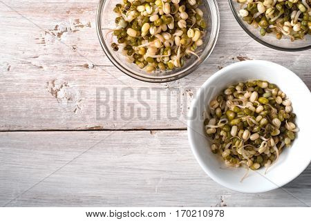 Germinated beans in glass and ceramic bowls horizontal