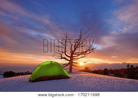 green tent and dead tree at sunrise in winter Etna Park, Sicily