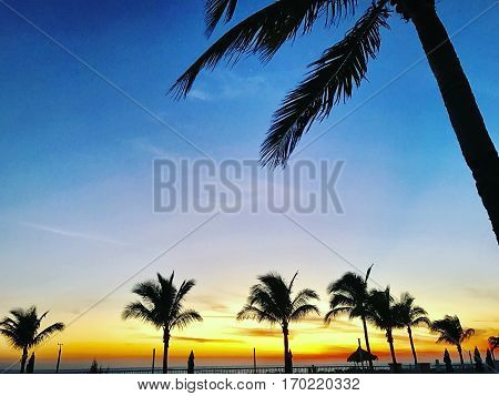 A tropical sunset with dreamy looking palm trees.