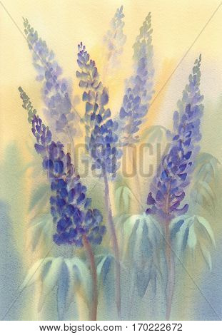 Arctic Lupine. Watercolor illustration, painting, of arctic lupine wild flowers with a yellow background.