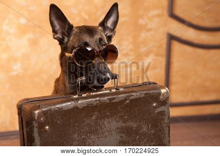 Happy dog traveler with cases in eyeglassess