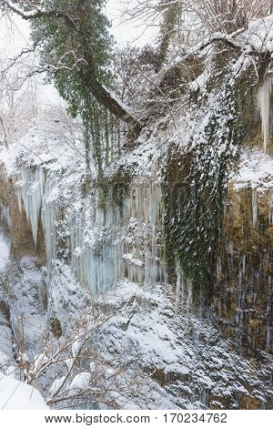 Icicles and evergreen Colchis ivy (lat. ?edera colchica K. Koch) on the steep slopes of the canyon - the gorge of the White river in the Republic of Adygea Russia. Snow winter cold day