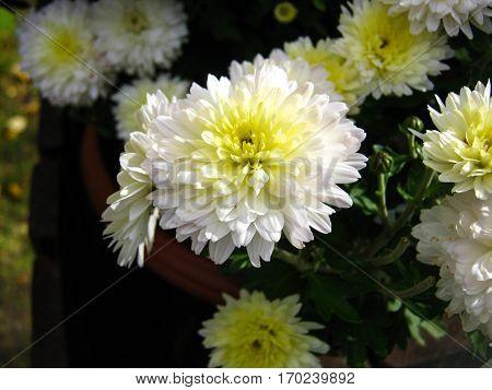 A closeup of a white, gracious flower