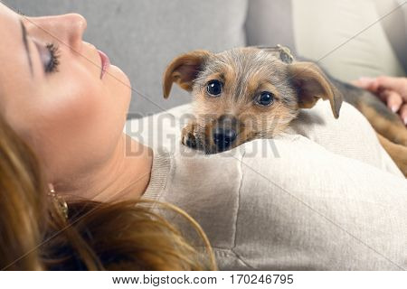 Puppy Dog And Woman