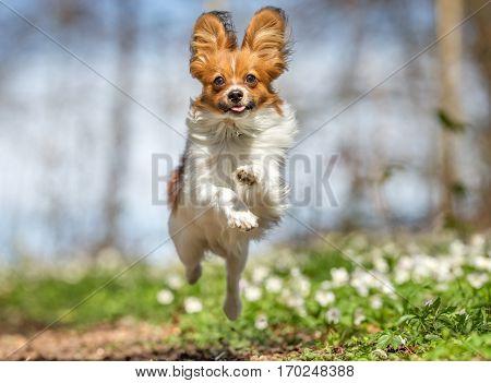 Terrier Dog During Spring