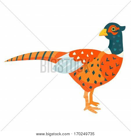 Colorful pheasant funny vector illustration cartoon style
