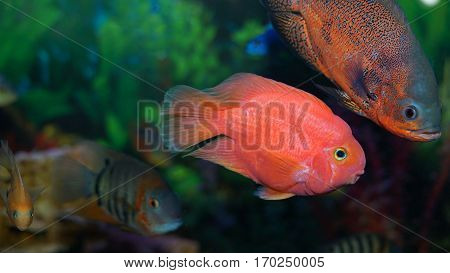 aquarium, fish, underwater, tank, nature, ocean, animal, water, tropical