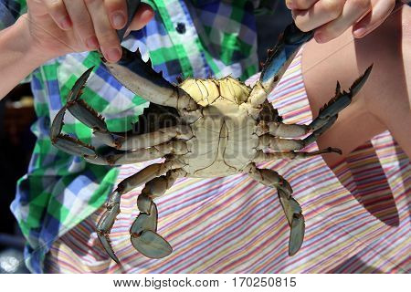 Caught Live Male Blue Crab In Child's Hands