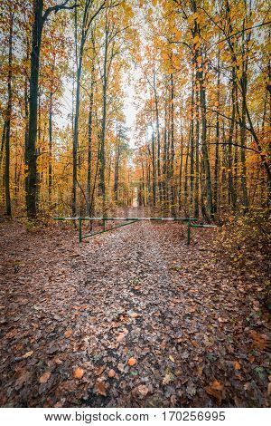 path in the colorful autumn forest. border