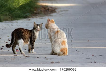 Two stray cats on the street Turkey