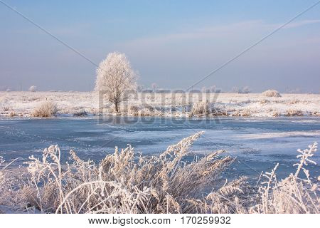 Lonely tree among the fields. frozen river. Winter forest landscape in early winter morning- deciduous frosty grass under winter snowfall and warm sunlight.