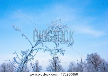 Winter nature. Winter forest landscape in early winter morning- deciduous frosty grass under winter snowfall and warm sunlight.