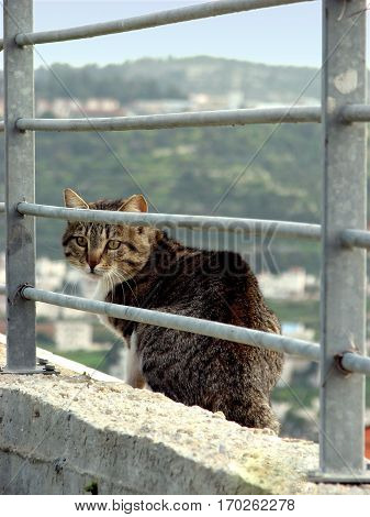 Striped cat sitting behind metal railings, looking scared