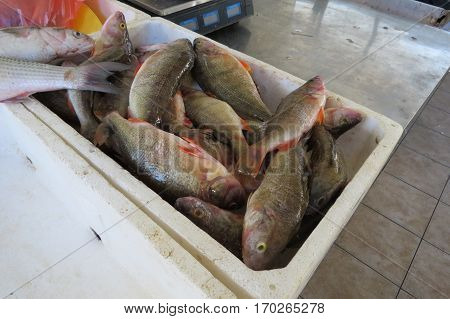 Perch (Barsch) from cold rivers in Bar suburban area from Montenegro.