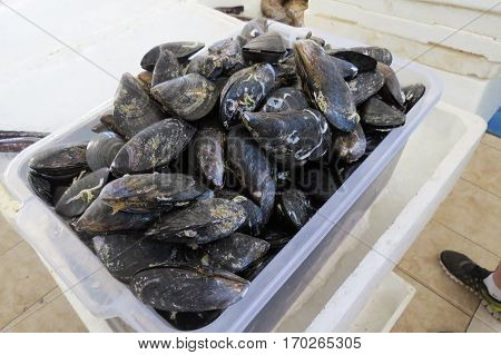 A box of fresh mussels in the fish shop in Bar-ciyy, Montenegro.