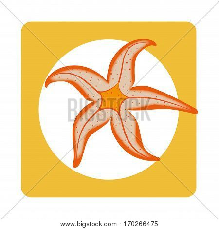 square border with Starfish aquatic animal vector illustration