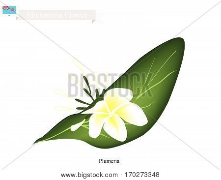 Micronesia Flower Illustration of Plumeria Frangipanis Flowers. The National Flower of Micronesia.