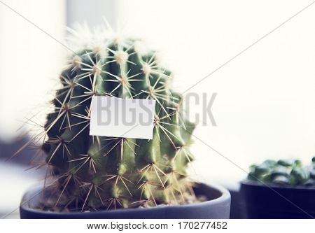 banner, beautiful, beauty, bloom, blossom, botanic, botany, bright, cactus, card, flora, floral, flower, flowerbed, garden, green, name card, nature, pattern, plant, season, sign, texture