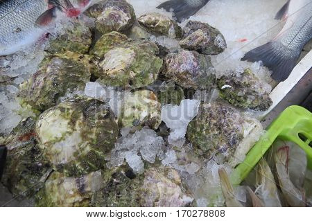 Oysters (Austern) from Adriatic sea in the fish market in Bar-city, Montenegro