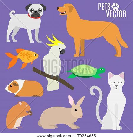 Set of most popular pets. isolated animals. cartoon flat design. vector illustration