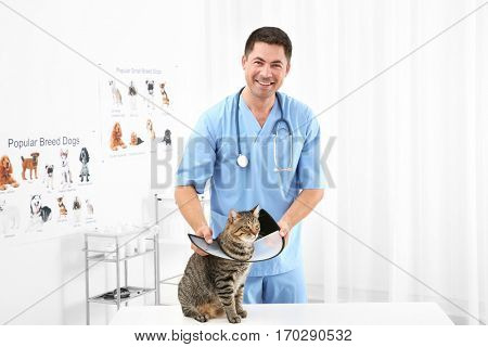 Handsome young veterinarian putting cone of shame on cat