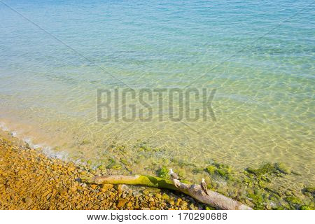 Paradise dream island natural beach in turquoise blue sea water. Mediterranean or Caribbean holiday vacation destination. Perfect nature visual for e.g. journey climate protection or peace.