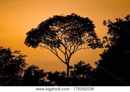 Sunset In Africa, And You Know That I Love Backlighting