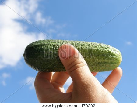 Holding Cucumber