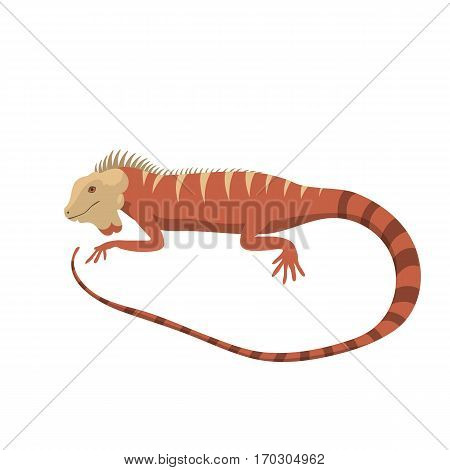 Iguana lizard reptile isolated vector illustration. Wild cartoon nature dragon funny design. Reptile flat drawing body monster character.