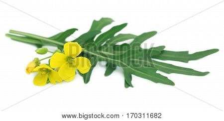 Fresh arugula or rucola leaves with flowers over white background