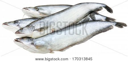 South Asian Boal fishes over white background
