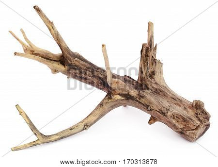 Close up of Driftwood over white background