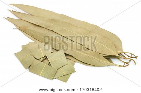 Close up of Dry Eucalyptus leaves over white background
