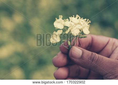 Close up of Hand holding mustard flowers outdoor