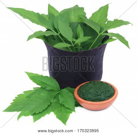 Medicinal Vitex Negundo leves in old bowl over white background