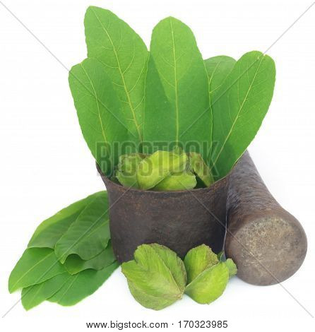 Green leaves of medicinal Terminalia arjuna with fruits in a vintage mortar with pestle