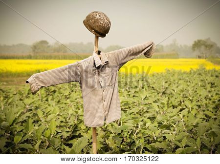 Close up of Scarecrow in rural area of Bangladesh