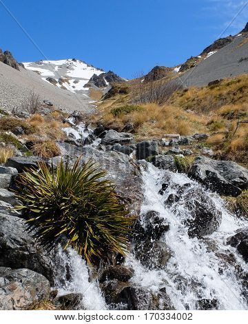 Speargrass and Waterfall in Craggyburn Ski Field.  Southern Alps, New Zealand.