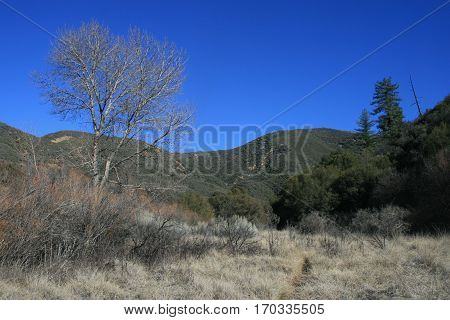 Meadow with trees and mountains, Ventura County, CA
