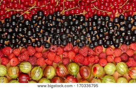 Collection of variety fruits (currants, gooseberries, raspberries, plums). Fruit background.Top view.