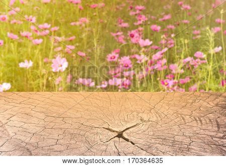 sweet dreamy and de-focused pink Cosmos meadow with sun flare in sunny day and texture section trunk of tree