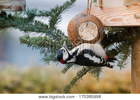 Great spotted woodpecker bird in black, white, crimson red patch on nape hanging from coconut shell suet treats made of fat, sunflower seeds during winter in Europe (Dendrocopos major)
